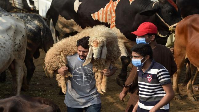 اجراءات احترازية من الحكومة الباكستانية قبل عيد الأضحى